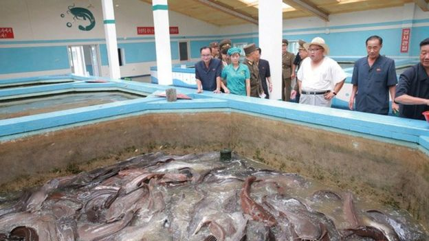 Kim Jong-un looks at fish at the Samchon catfish farm