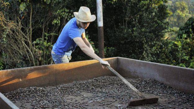 A sus 19 años, el joven Camilo Restrepo ha encontrado en el cacao una forma para ganarse bien la vida.