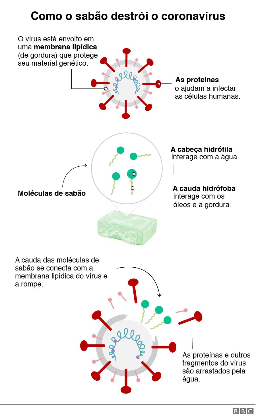 Representação gráfica de como o sabão destrói o coronavírus.