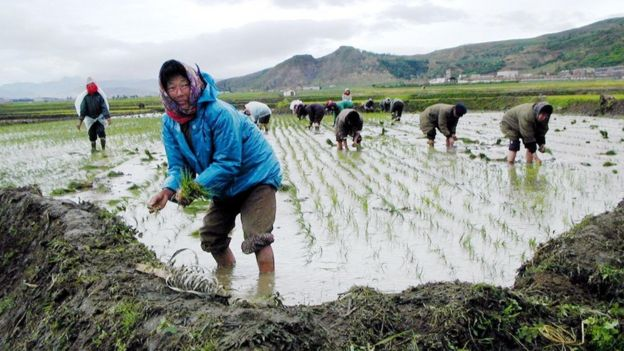 North Korean cooperative farm workers in Kilju county, North Hamgyong province,