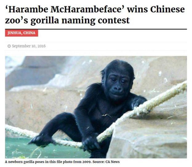 harambe mcharambeface is fakey mcfakeface bbc news
