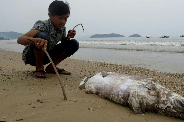 Formosa, Việt Nam, môi trường