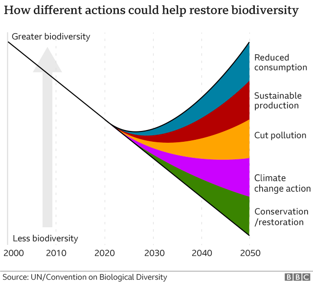 How actions could restore biodiversity