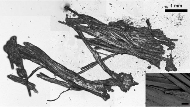 Fibras musculares encontradas em múmia