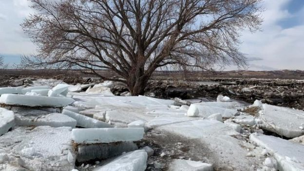 ice chunks near a tree