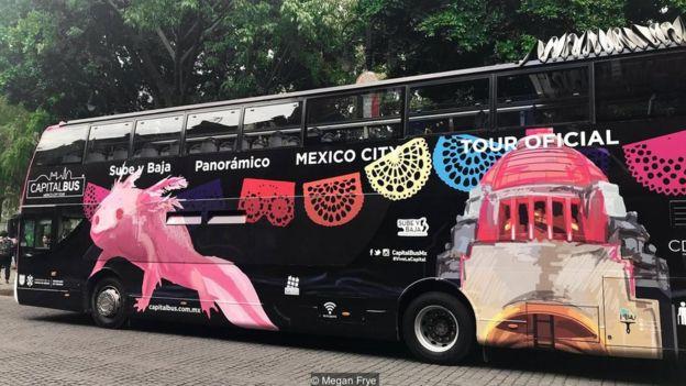 Ônibus com desenho de axolote