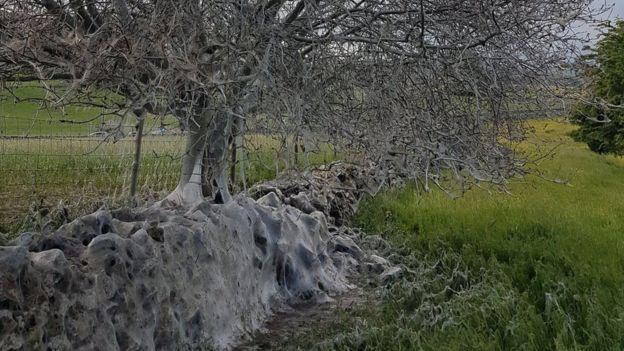 Árvore infestada por lagartas