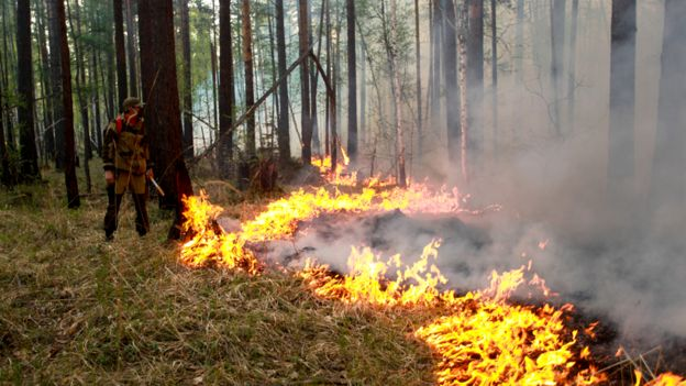 A fire fighter stands by a forest fire, watching it spread