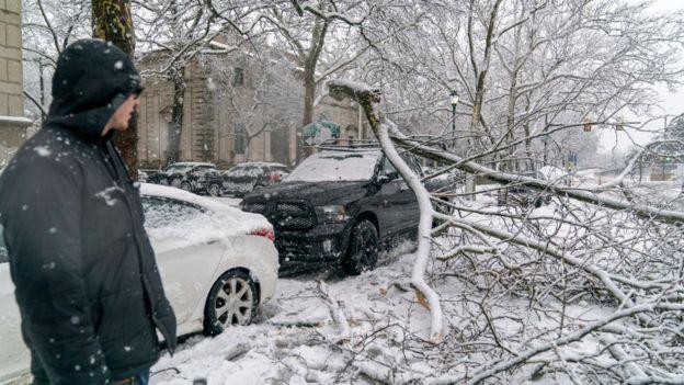 Branch fell on a car