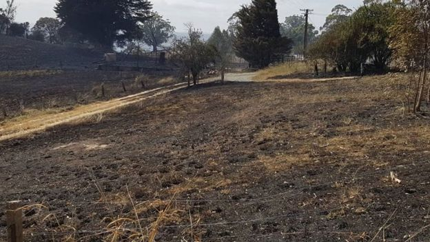 Blackened land at the Tilbrook Estate after wildfires in the Adelaide Hills.