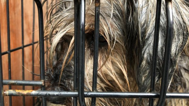 Puppy Farmers May Kill Unwanted Dogs To Evade Ban Warn Campaigners