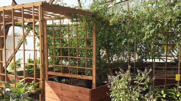 En el domo de la educación, los voluntarios cultivan plantas todos los días.