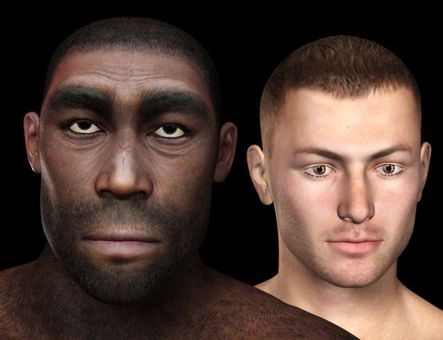 Homo erectus y hombre moderno