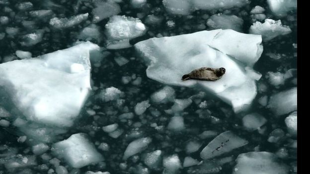 ภาพน้ำแข็งละลาย