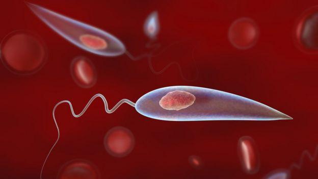 Protozoário do gênero Leishmania