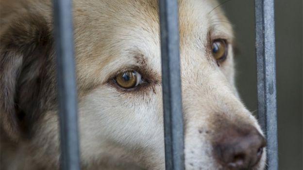 تظل الشكوك تساور نشطاء يتخوفون أن تتم عمليات التصدير لدول تنتهك حقوق الحيوان