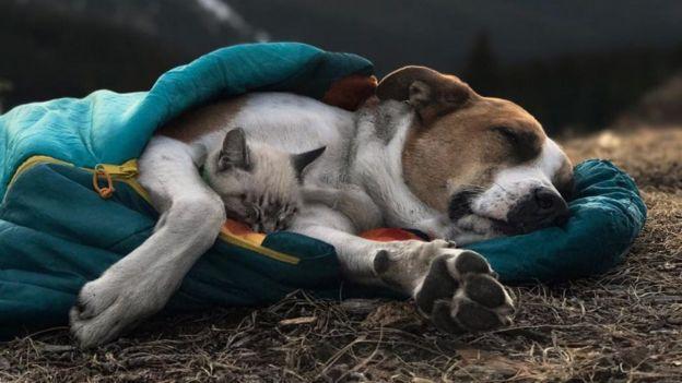 Gato e cachorro dormindo juntos dentro de um saco de dormir