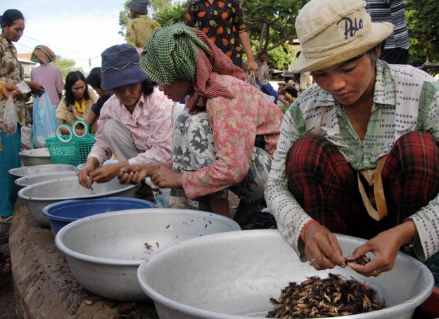 Market workers sort crickets to sell