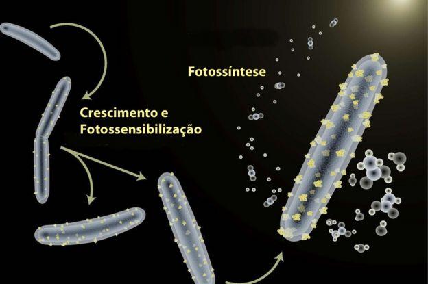 Bactéria 'ciborgue'