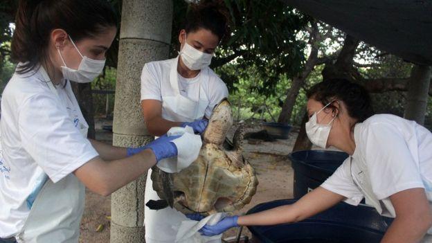 Mulheres limpando tartaruga