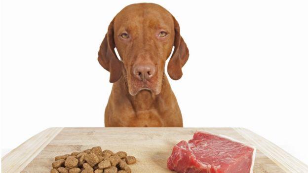Perro mirando un trozo de carne y comida seca