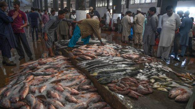 کراچی فشریز میں تازہ پکڑی گئی مچھلیاں نیلامی کے لیے رکھی ہیں