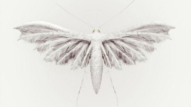 Rain Bird (Aucellus pluvia), de Vincent Fournier.