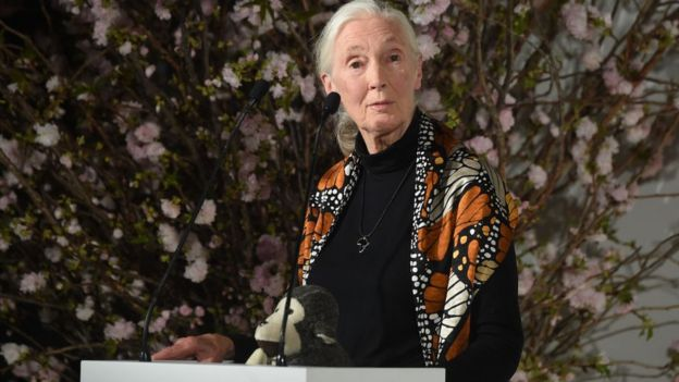 Jane Goodall hablando en una conferencia.