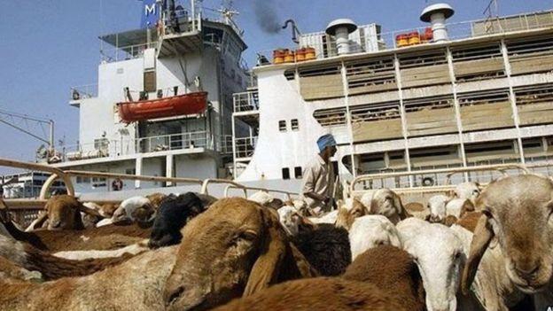 جزيرة سواكن: ما مصير الاتفاق التركي السوداني حولها بعد الإطاحة بالبشير؟