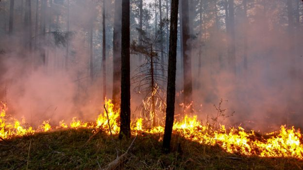 A fire spreading through the forests of Siberia