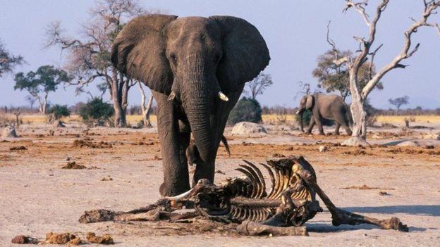 حقائق مدهشة عن شعور الحيوانات بالحزن لفقدان أقرانها
