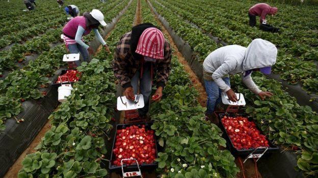 pessoas trabalhando em plantação
