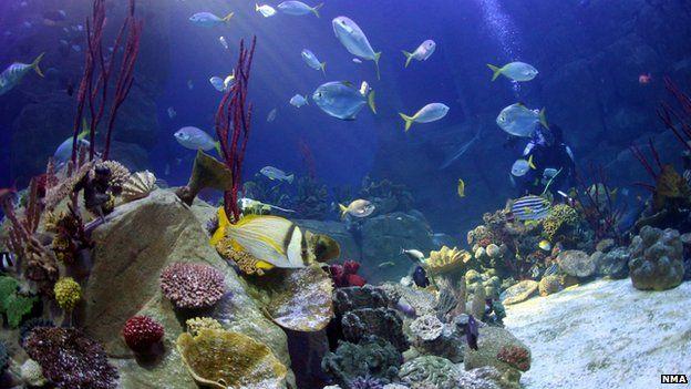 Coral seas aquarium tank (Image courtesy of the National Marine Aquarium)