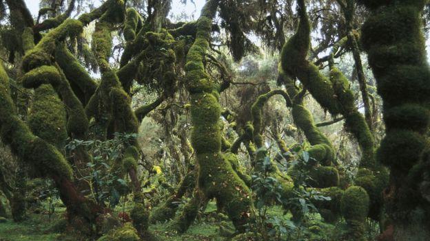 Inside a dense Ethiopian forest