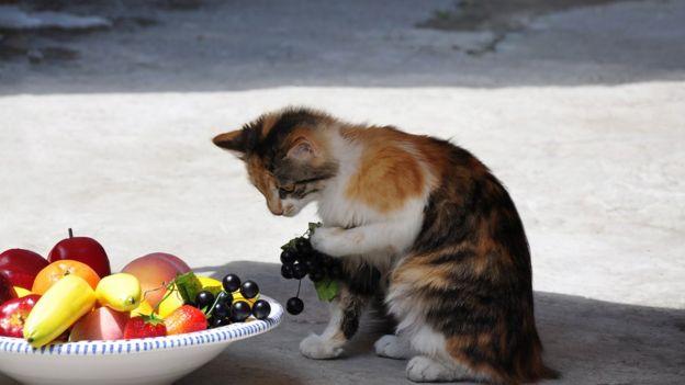 Un gato junto a una cesta de frutas.
