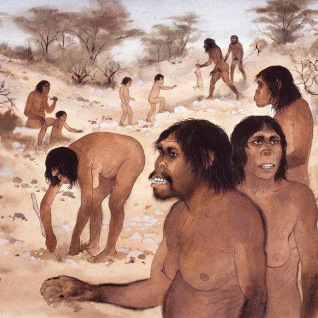 Comunidade de Homo habilis