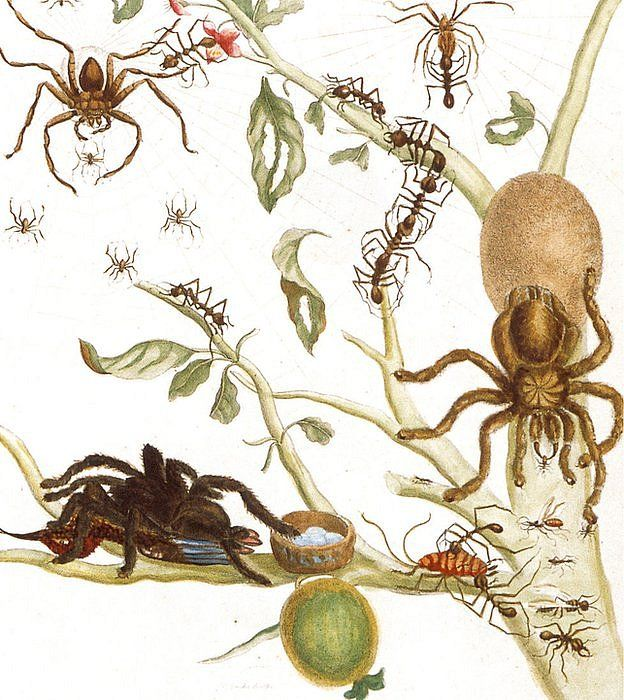 arañas que comían pájaros en árboles de guayaba