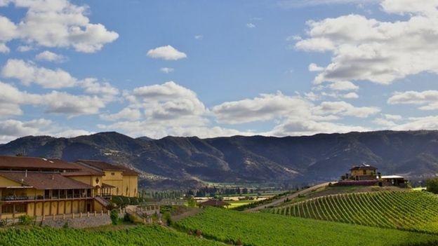 Una vista panorámica de los viñedos de Carlos Cardoen