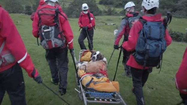 Daisy on stretcher being carried