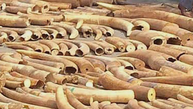 Ivory in Cambodia