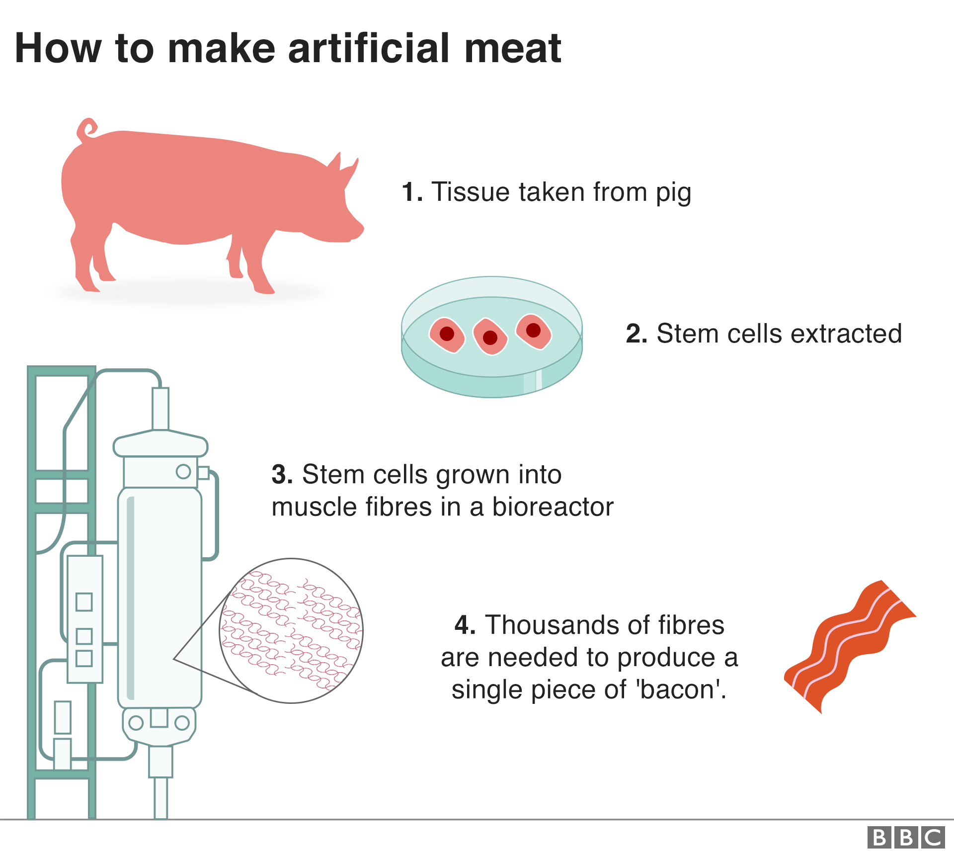 Graphic: How to make artificial meat