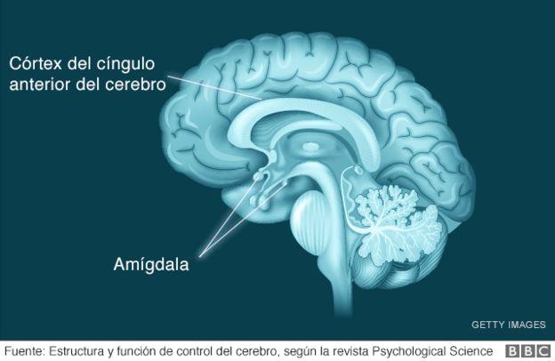 mapa de la estructura del cerebro