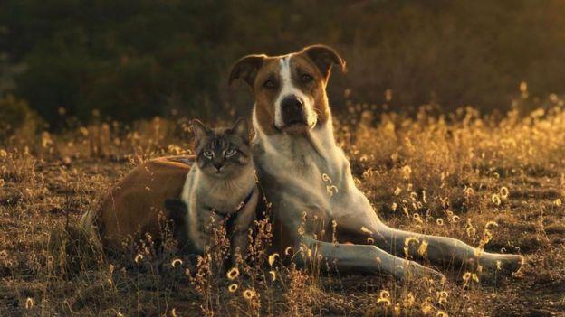 Los animales se encuentran en un campo juntos