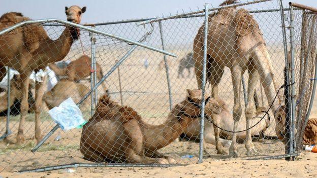الدول المقاطعة تقول إن خسائر قطر بعد عام كبيرة