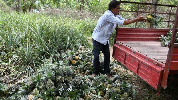 Imagem mostra homem jogando abacaxis na carroceria de um veículo