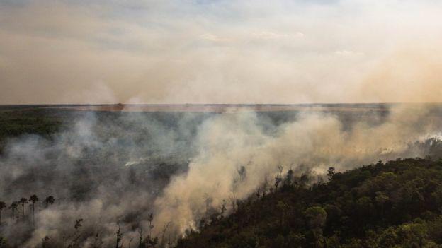 Fogo no cerrado brasileiro