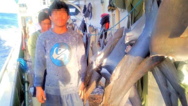 Crew with shark fins photo on vessel