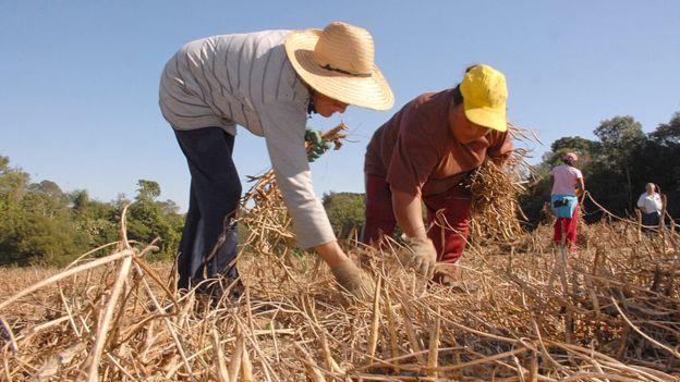 Agricultores trabalham no campo