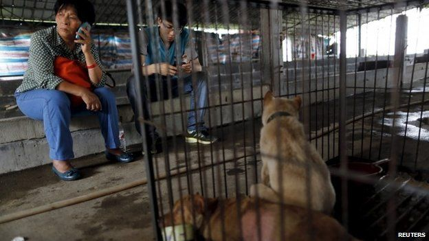 Animal lover Yang Xiaoyun (L) uses a mobile phone next to a cage accommodating dogs which she purchased from dog vendors to rescue them from dog meat dealers at a temporary shelter ahead of a local dog meat festival in Yulin, Guangxi Autonomous Region, June 21, 2015.