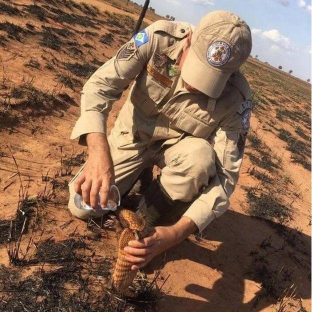 Bombeiro dá água a tatu após incêndio na área de fazenda entre os municípios mato-grossenses de Nova Mutum e São José do Rio Claro